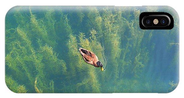 Mallard Over Seaweed IPhone Case