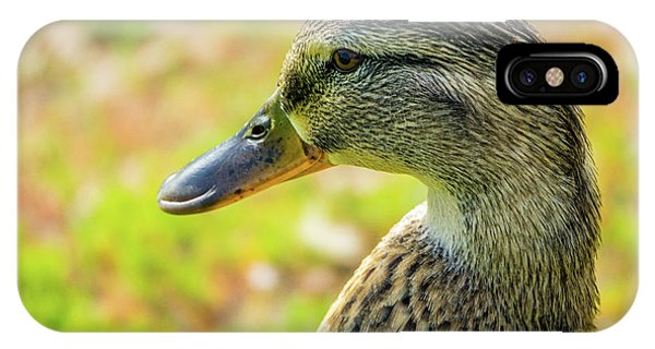 Mallard Portrait - Female IPhone Case