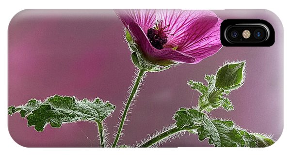Mallow Flower 3 IPhone Case