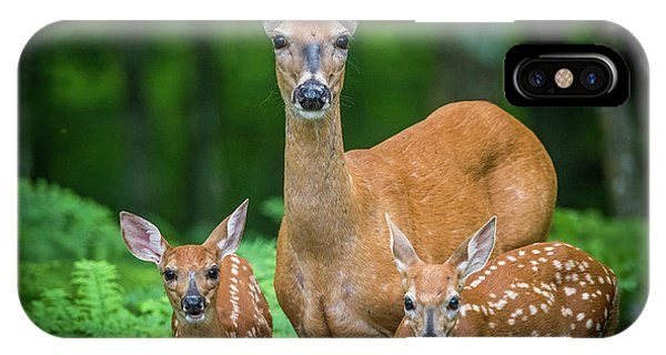 White Tailed Deer iPhone Case - Mama And Fawns by Paul Freidlund