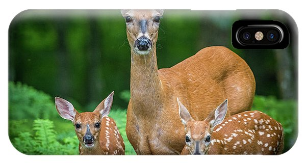 Mama And Fawns IPhone Case
