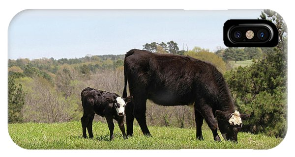 Mama Cow And Calf In Texas Pasture IPhone Case