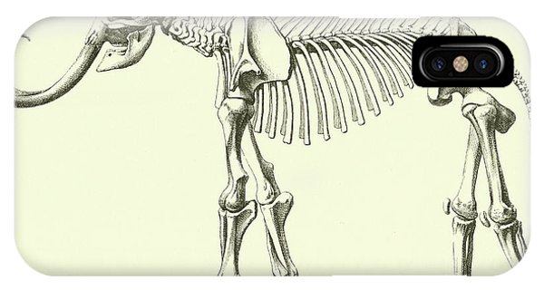 Bone iPhone Case - Mammoth, Elephas Intermedius by French School