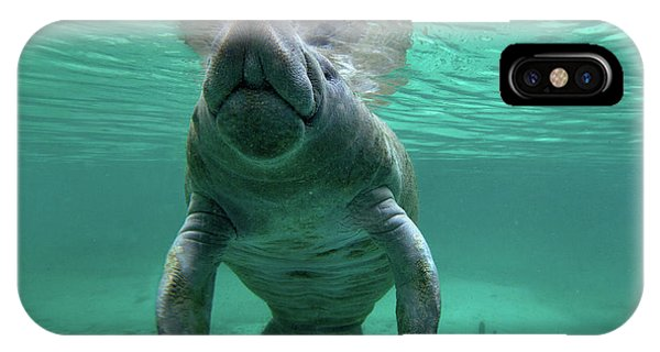 Manatee Breathing IPhone Case