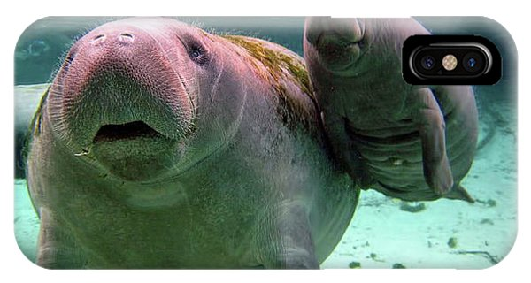 Manatee Mom And Calf IPhone Case