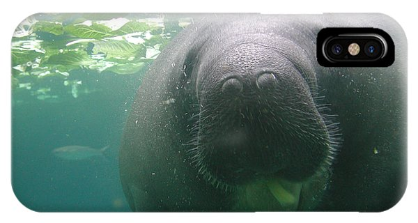 Manatee Raspberry IPhone Case