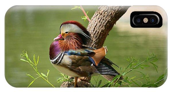 Mandarin Duck On Tree IPhone Case