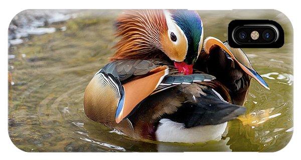Mandarin Duck Preening Feathers IPhone Case