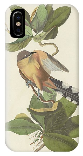 Cuckoo iPhone Case - Mangrove Cuckoo by Dreyer Wildlife Print Collections