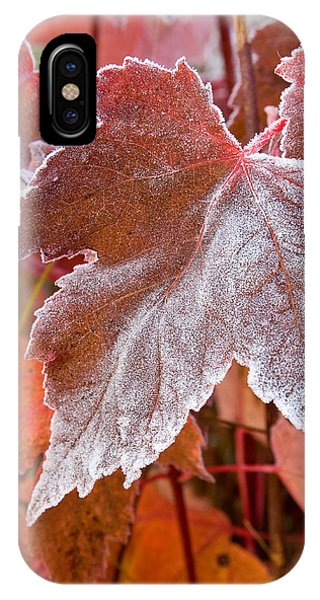 Maple Frost  IPhone Case