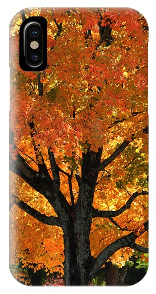 Maple Hill Maple In Autumn IPhone Case