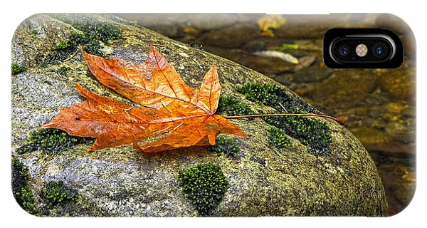 Maple Leaf On A Rock IPhone Case