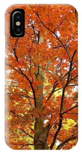 Oyama iPhone Case - Maple Mania 22 by Will Borden
