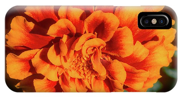 IPhone Case featuring the photograph Marigold Closeup by John Brink