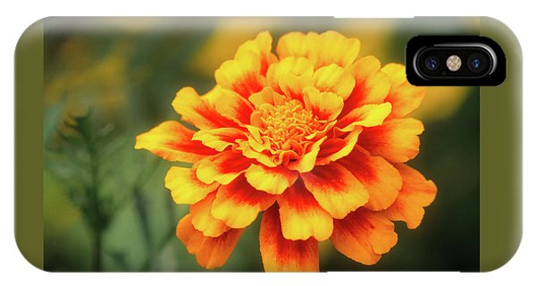 IPhone Case featuring the photograph Marigold by John Brink