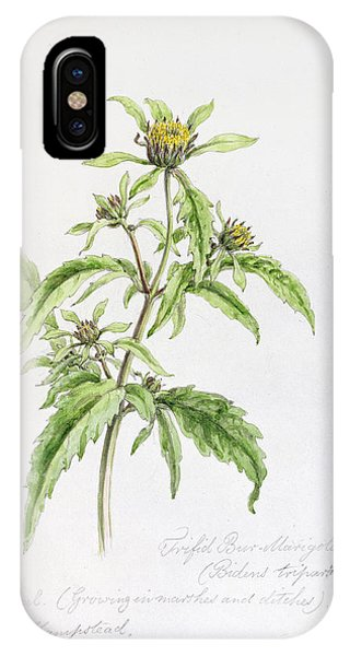 Botany iPhone Case - Marigold by WJ Linton
