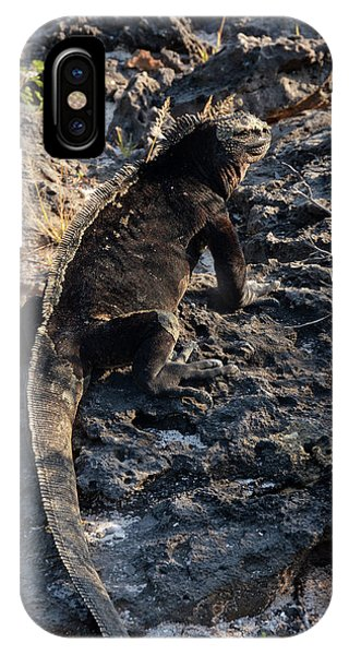 IPhone Case featuring the photograph Marine Iguana, Amblyrhynchus Cristatus by Breck Bartholomew