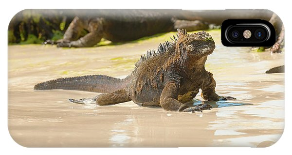 Marine Iguana On Galapagos Islands IPhone Case