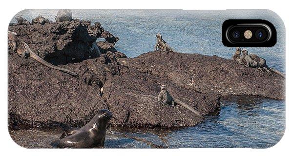 Marine Iguanas And Sealion Pup At Punta Espinoza Fernandina Island Galapagos Islands IPhone Case
