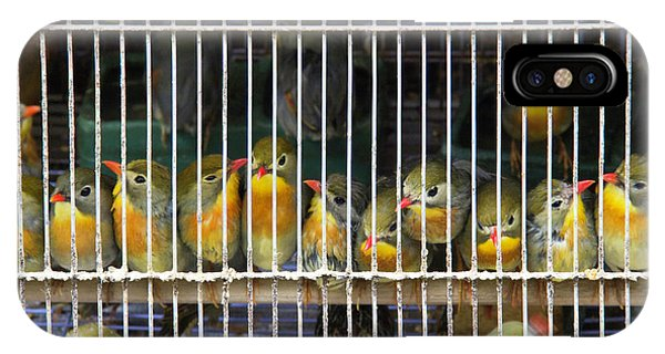 Market Finches IPhone Case