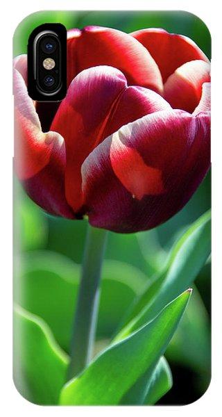 Maroon Tulip IPhone Case