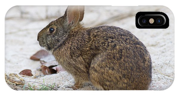 Marsh Rabbit On Dune IPhone Case