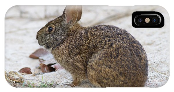 Marsh Rabbit On Dune IPhone Case