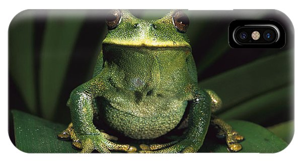 Marsupial Frog Gastrotheca Orophylax IPhone Case
