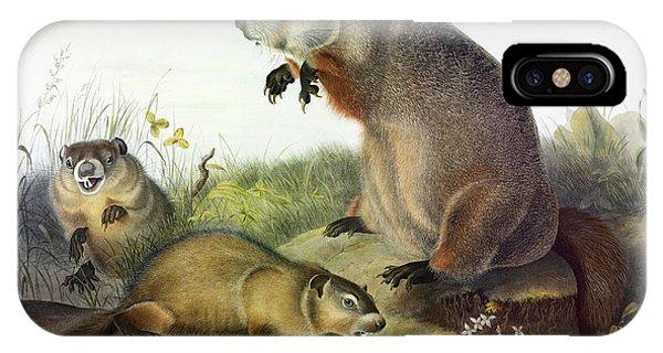 Groundhog iPhone Case - Maryland Marmot, Woodchuck, Groundhog by John James Audubon
