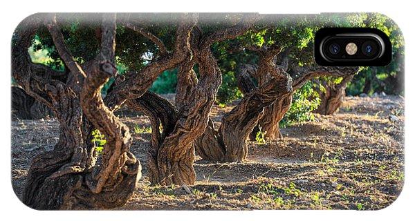 Mastic Tree   IPhone Case
