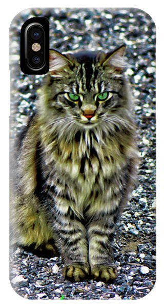 Mattie The Main Coon Cat IPhone Case