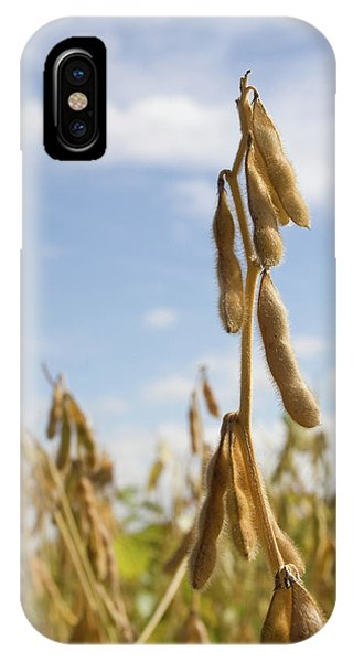 Maturing Soybeans IPhone Case