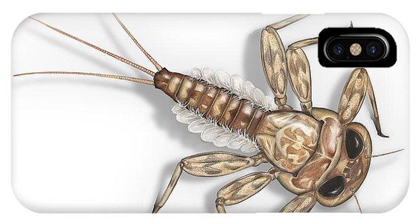 Mayfly Larva Nymph Rithorgena Ecdyonurus Venosus - Moscas De May IPhone Case