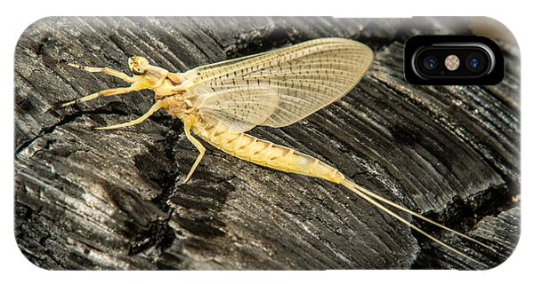 Pterygota iPhone Case - Mayfly On Charcoal by Douglas Barnett