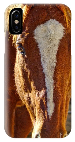 Mccool, Grandson Of Secretariat IPhone Case
