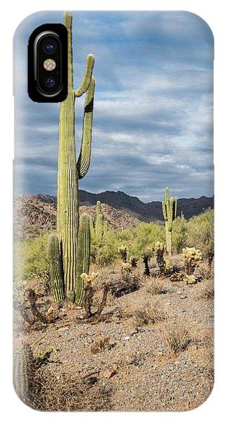 Mcdowell Cactus IPhone Case
