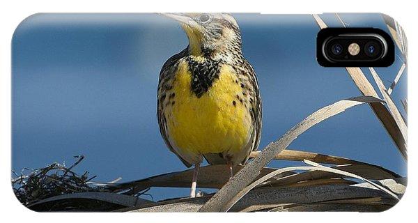 Meadowlark Beauty IPhone Case