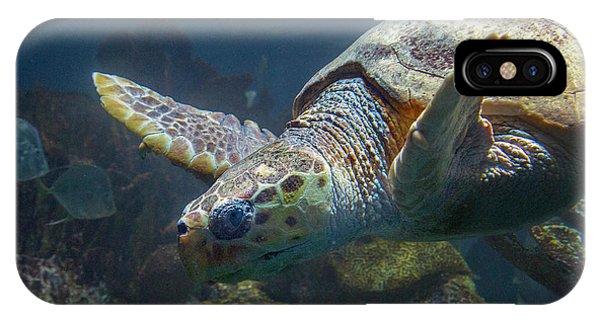 Meandering Green Sea Turtle IPhone Case