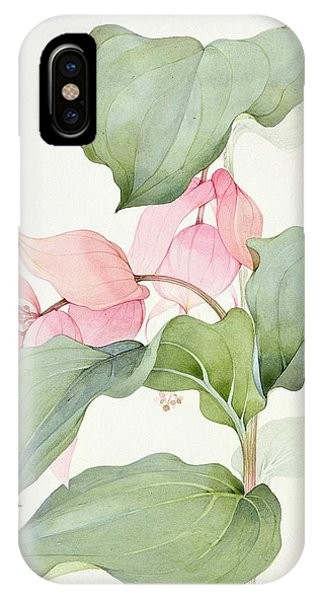 Pistil iPhone Case - Medinilla Magnifica by Sarah Creswell
