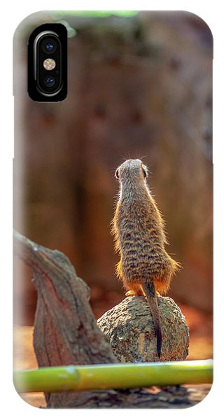 Meerkat 2 IPhone Case