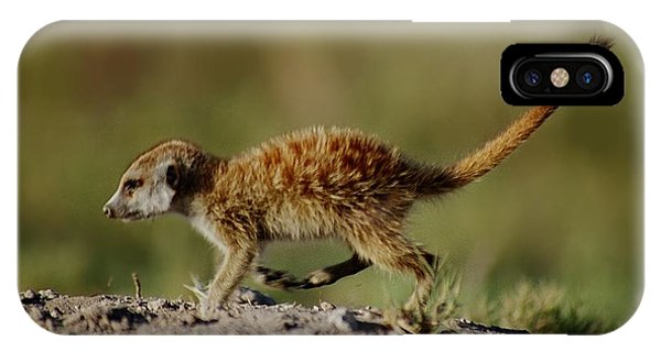 Meerkat Baby IPhone Case