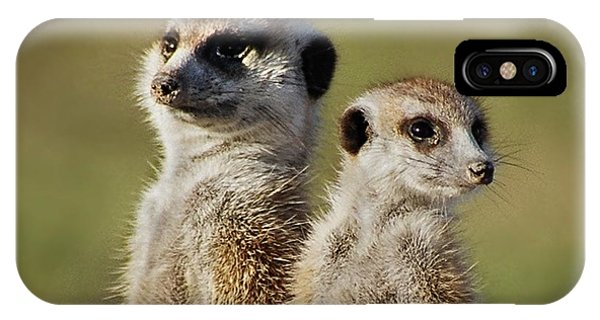 Meerkat Duo IPhone Case