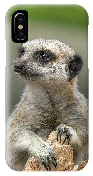 Meerkat Model IPhone Case
