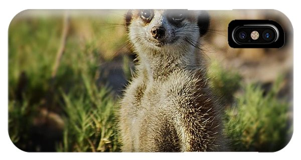 Meerkat Portrait IPhone Case
