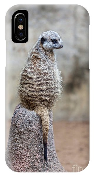 Meerkat Sitting And Looking Right IPhone Case