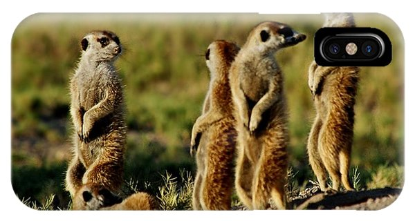 Meerkats Watching Everywhere IPhone Case