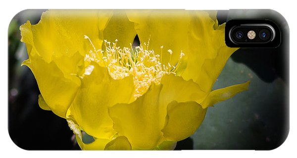 Mellow Yellow Cactus Flower IPhone Case