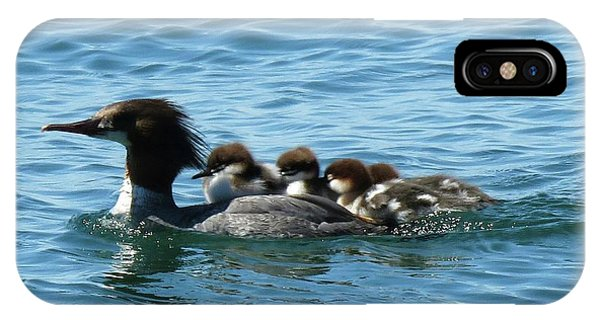 Merganser And Her Chicks IPhone Case