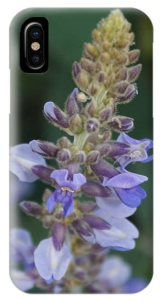 IPhone Case featuring the photograph Mexican Answer To Bluebonnet by Cindy Charles Ouellette