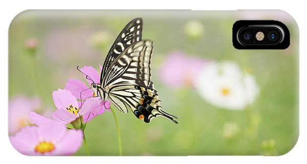 Mexican Aster With Butterfly IPhone Case